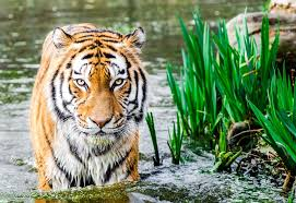 Image result for malysia wild life animal